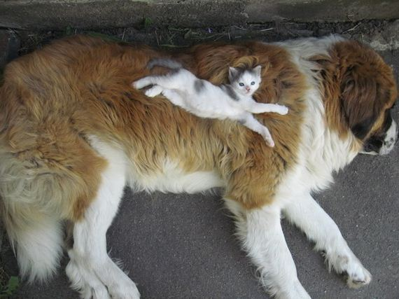best-animal-cuddlers