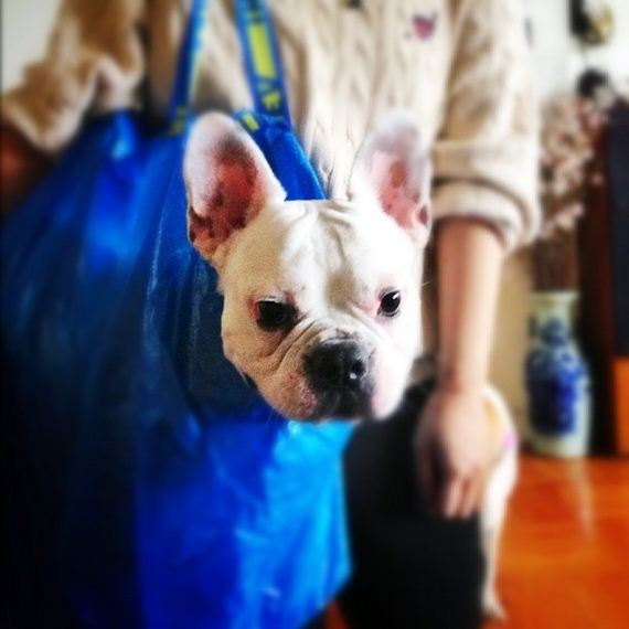 best-dogs-bags