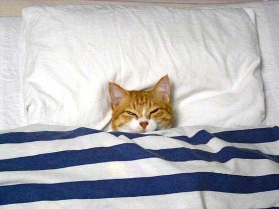best-things-about-cat-bedtime