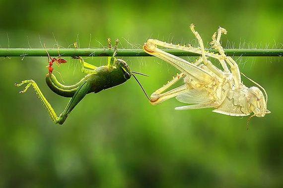 bug_doubler