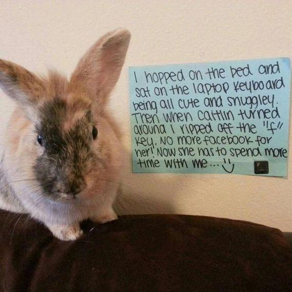 bunny_shaming