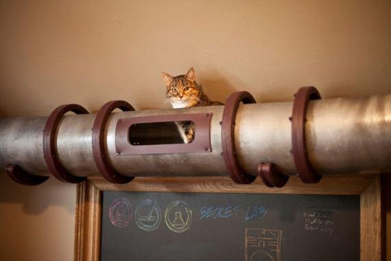 cat-transit-system