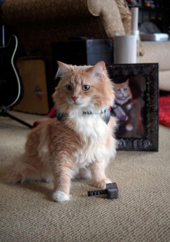 cat_dressed_up_like_thor