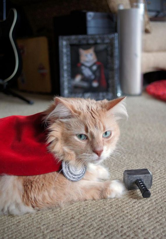 cat_dressed_up_like_thor