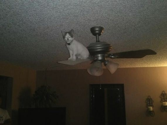 cats-who-have-ended-here