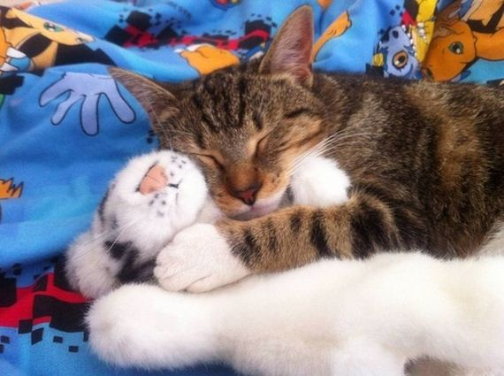 cats_snuggling