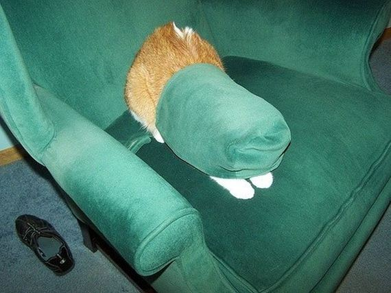 cats_who_are_awful_at_hide_and_seek