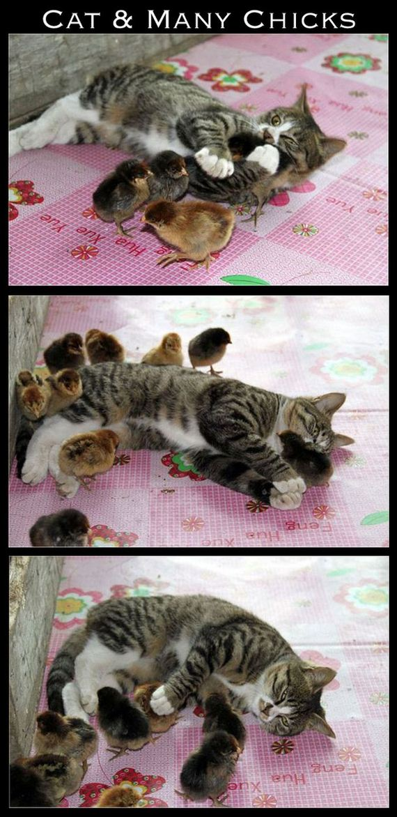 cute-interspecies-friendships