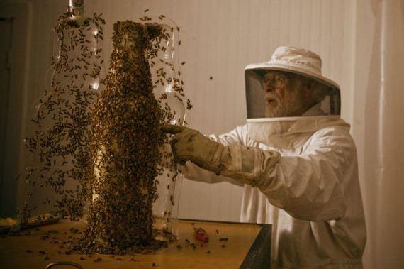 dewars_honey_bees