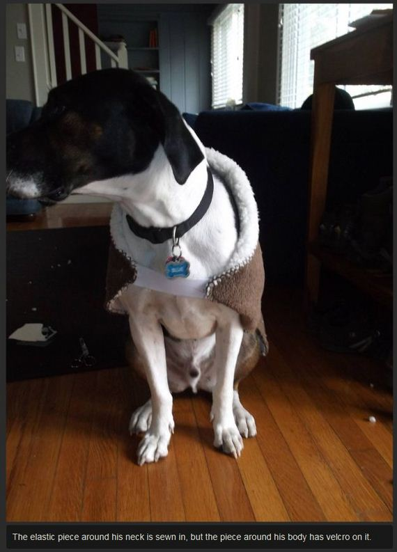 diy-dog-backpack