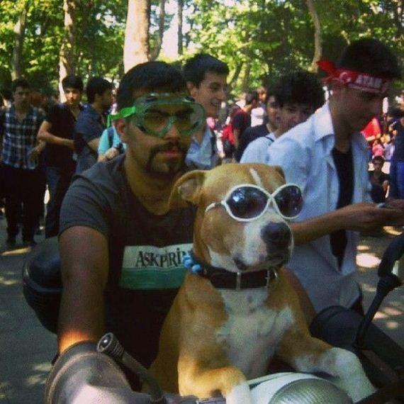 dog_glasses