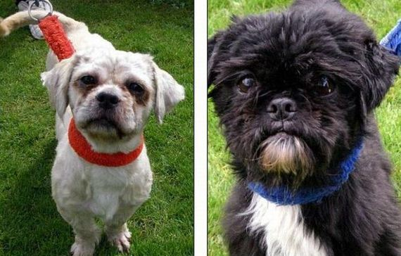 dogs-before-and-after-the-adoption-