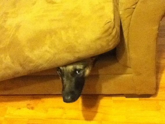 dogs-who-suck-Hide-And-Seek