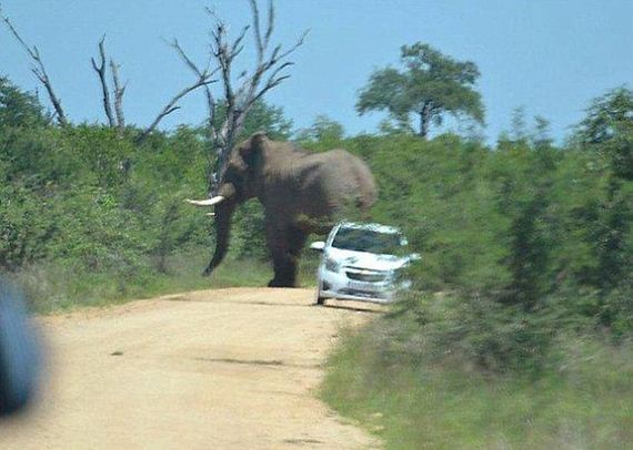 elephant-who-hates-cars