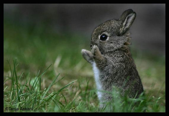expect-bunnies