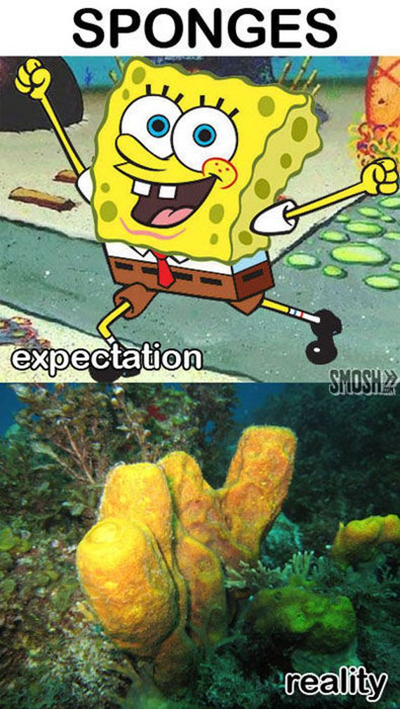 expectation_and_reality