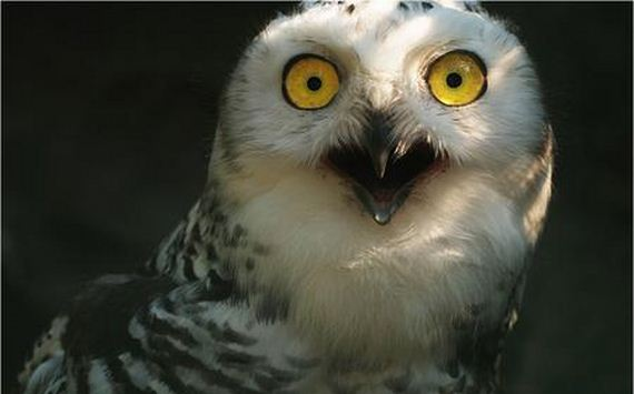 extremely-shocked-animals