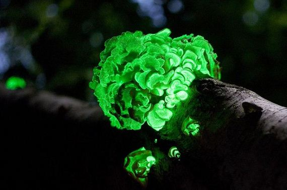 fascinating_fungi_around_the_world