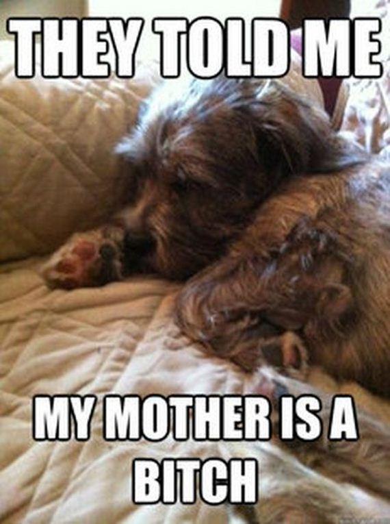 first_world_dog_problems