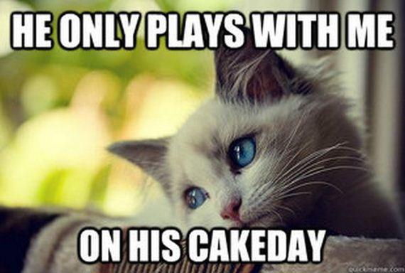 first_world_problems_cat