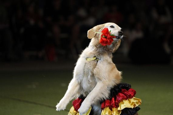 flamenco-dancing-dog