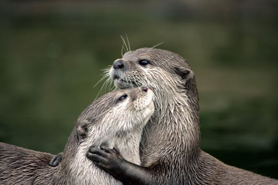 friends-otters