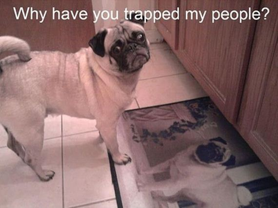 funny-pictures-363