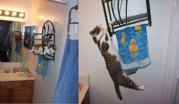 funny-pictures-413