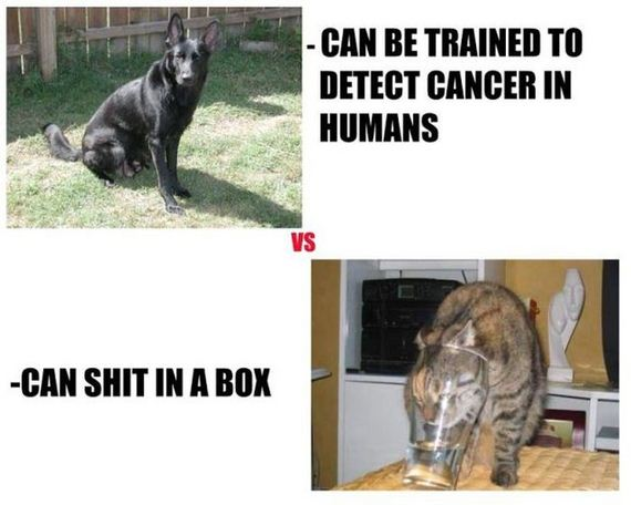 funny-pictures-436