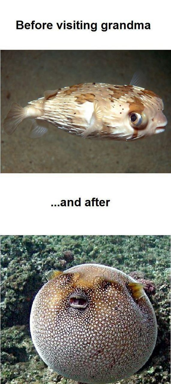 funny-pictures-440