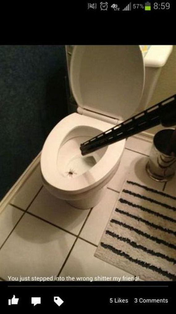 funny-pictures-508