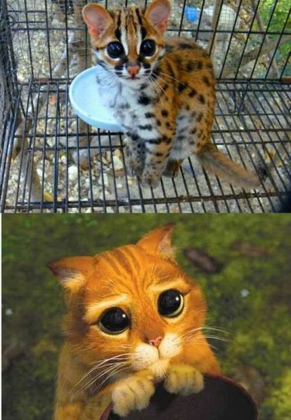 funny-pictures-512