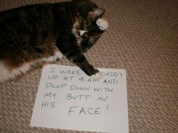 funny-pictures-531