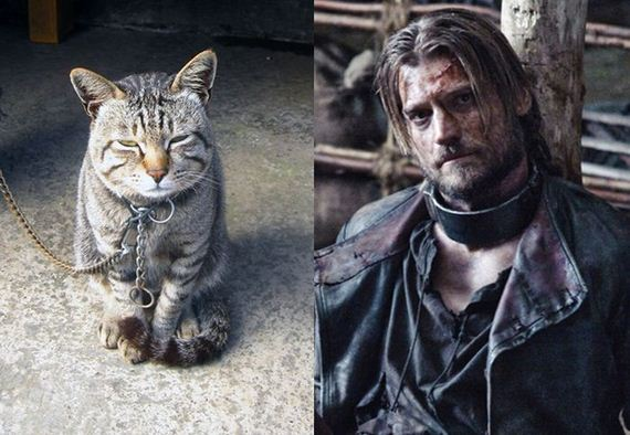 game_of_cats