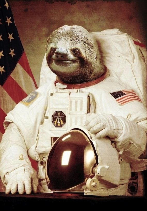 greatest-sloths-internet