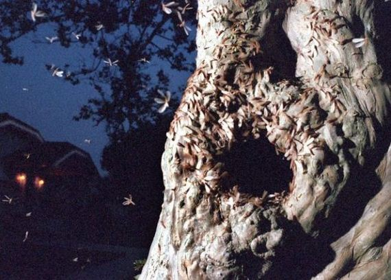 gross_and_creepy_termite_swarm