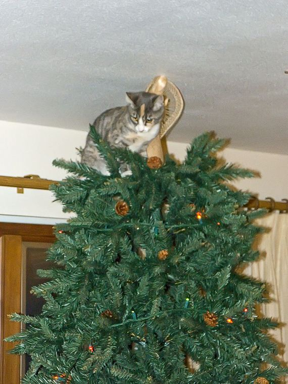Guilty faces of cats in christmas trees barnorama Christmas tree cat tower