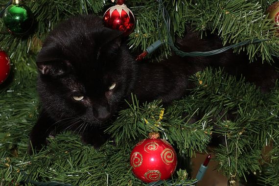 Guilty Faces Of Cats In Christmas Trees - Barnorama