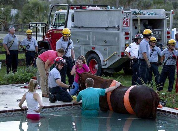 horse-rescue
