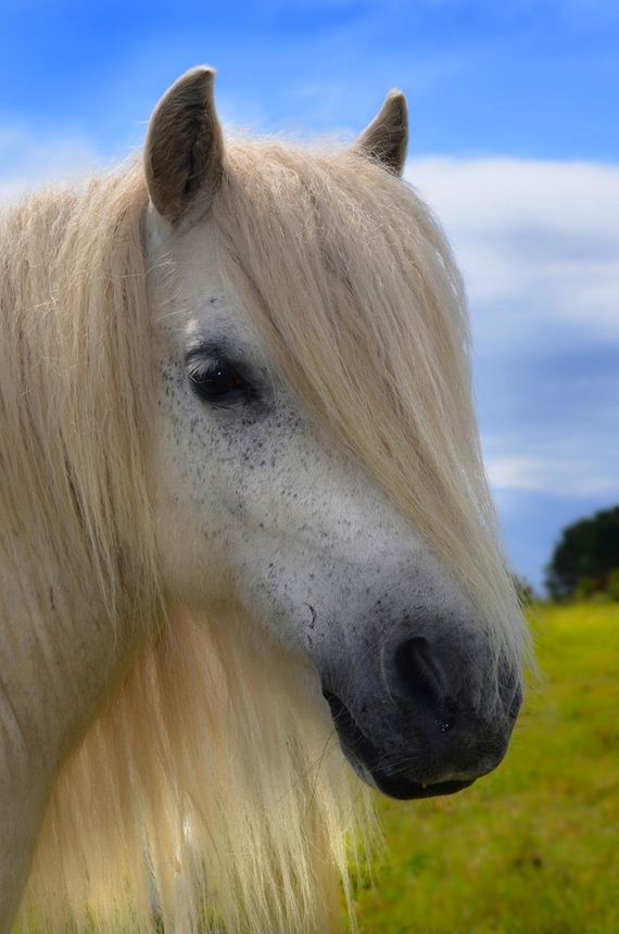 horses-with-better-hair