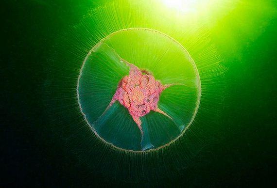 jellyfishscapes