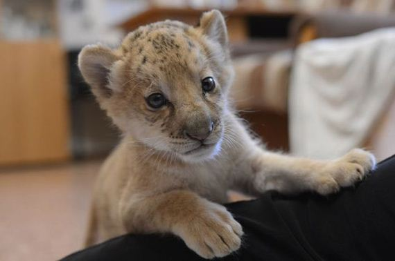 kiara-is-the-first-born-liliger-ever