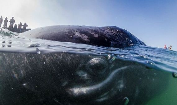 kiss_a_whale