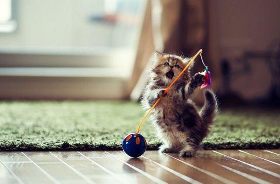 little-kitten