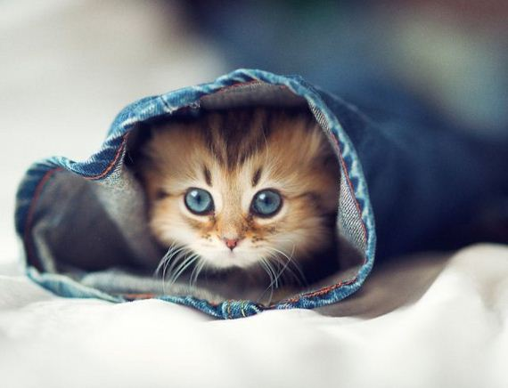 little-kitten