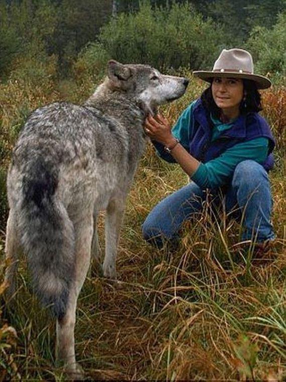 living-wolves