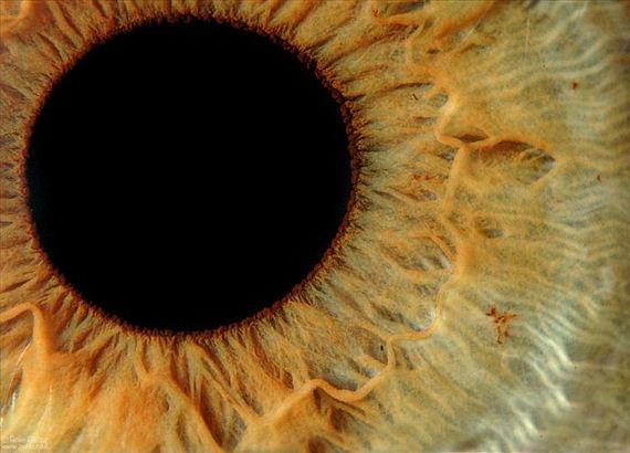 mesmerizing_eyes_photography