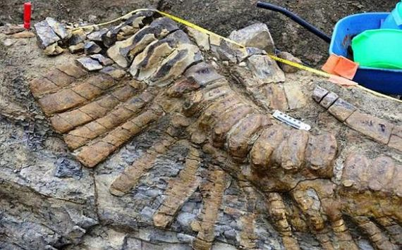 million_year_old_dinosaur_remains_discovered