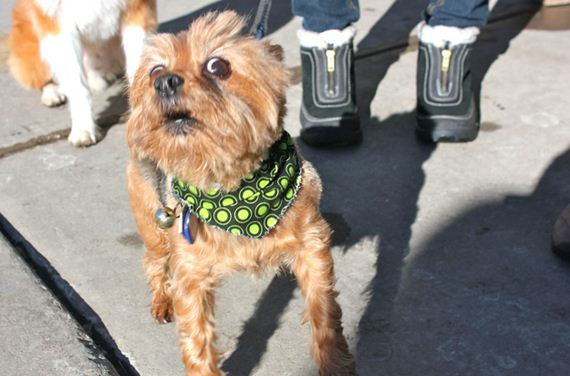most-famous-dogs-at-sundance