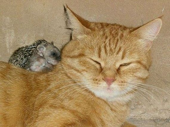 new-mom-for-baby-hedgehogs